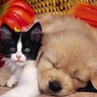 领养小猫小狗