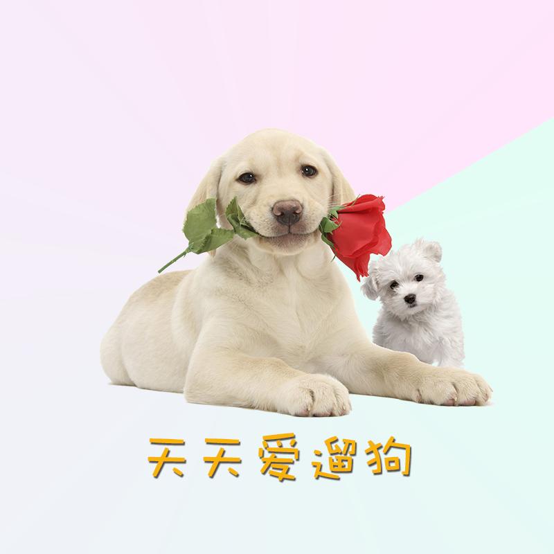 天天爱遛狗-微信小程序